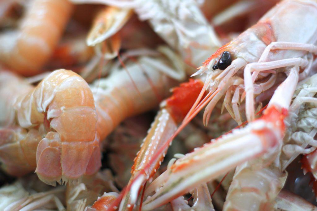 Shrimp close-up